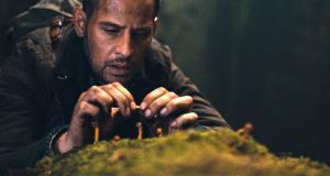 Auf der Suche nach Magic Mushrooms
